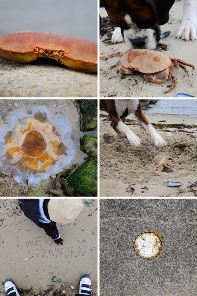 krabbstranden