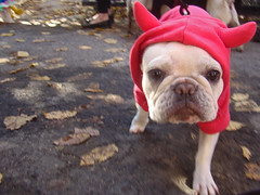 nyc newyorkcity dog eastvillage newyork photo foto image awesome lowereastside snapshot picture photograph frenchbulldog gothamist 犬 animale dogrun howloween 狗 tompkinssquarepark halloweencostumes halloweendogs dogcostumes dogcostume halloweendog halloweendogparade devilcostume costumeddog dogwearingclothes newyorkdogs eastvillagedogparade halloweenhowl doginacostume decoratedanimal doghalloweencostumes halloweendogcostume tompkinssquareparkhalloweendogparade howlloween canetravestito caneincostume halloweencostumesfordogs devildogcostume frenchbulldogcostume frenchbulldoghalloweencostume halloweendogcostumecontest halloweendogparade2009 2009tompkinssquareparkhalloweendogparade 2009eastvillagedogparade doginahalloweencostume 19thannualtompkinssquarehalloweendogparade frenchbulldoghaloweencostume halloweencostumeforafrenchbulldog