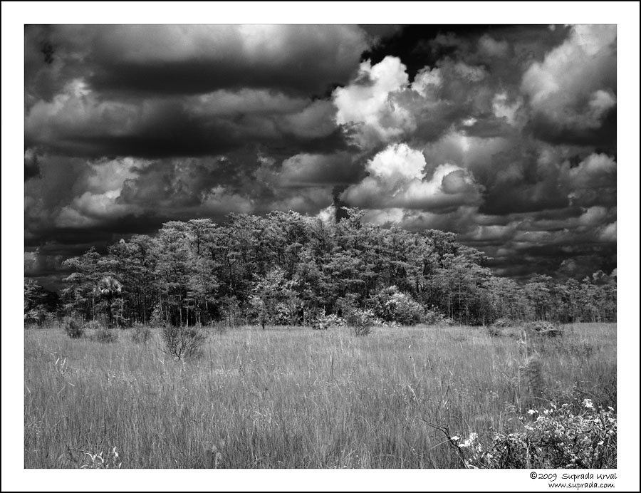 Everglades in Infrared - 5