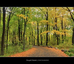 Feel the freshness ~Moongil Kadugale~ (D | E | E | P | A | K) Tags: road autumn green fall colors beauty minnesota forest canon rebel tripod fresh 1855mm mn manfrotto minnesotalandscapearboretum feelthefreshness canonrebelt1i deepakprakash re