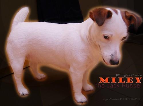 My puppy, Miley 4068295626_88375d5c84