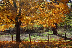 (John P.C.) Tags: autumn orange sun tree fall leaves yellow canon fence october kentucky ky foliage 1001nights