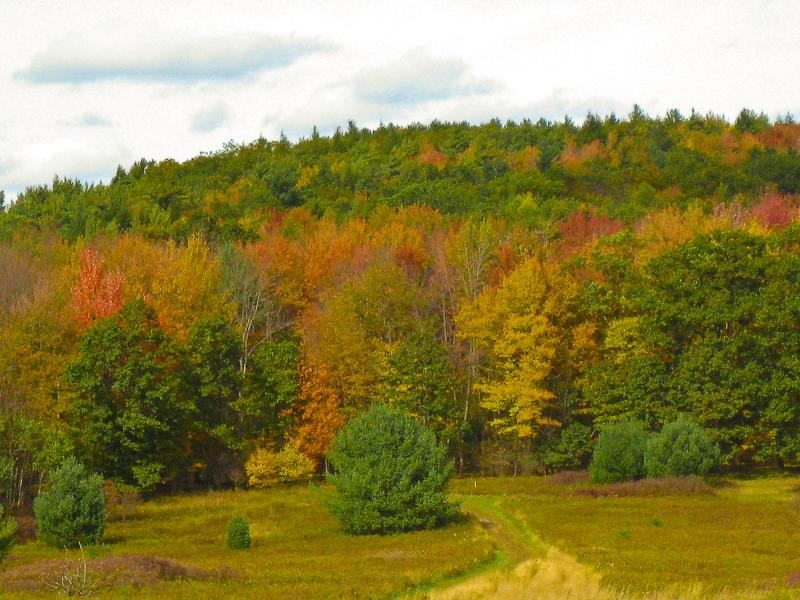 field near Franklin