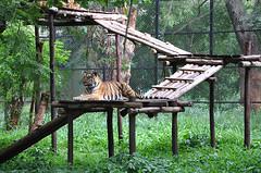 mysore zoo 2