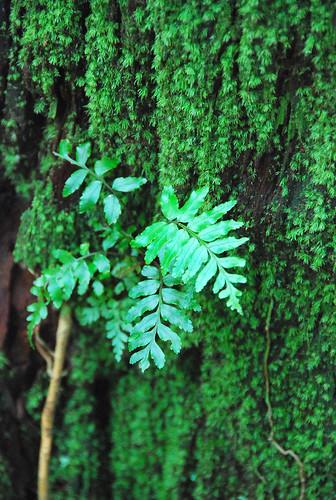 植物真是美呢