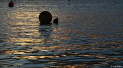 Floating Gently (Frog n fries) Tags: sunlight abstract water evening glow estuary devon bouys exe topsham digitalcameraclub solofotos