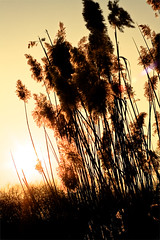 the last sunrays (Martin.Matyas) Tags: winter canon canonef50mmf18 eos400d grosshart