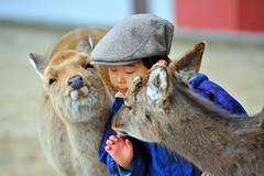 Miyajima island (Derekwin) Tags: boy cute hat animal japan japanese nikon kiss deer miyajima human gentle flickrduel d700 nikond700