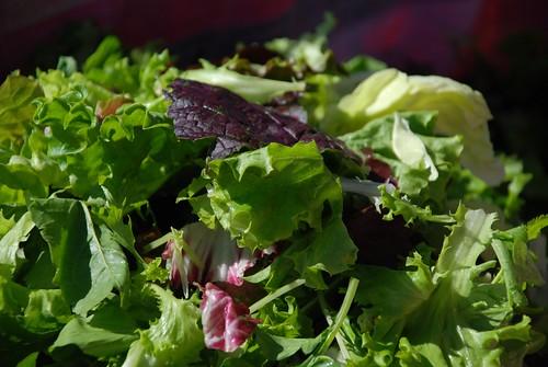 the lettuce farm in homestead, florida
