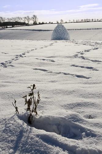 neige igloo flocon glace printemps hiberne coeur sanglote ame attend bien aimee grandir loin d elle love cocon amour dieu poesie poeme danseur romantique texte poetique neiges eternelles photo