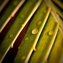 water_droplet_leaves (1 of 1)-2
