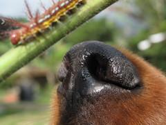 casi se comen al gusano (ca.millionaire) Tags: dog insect beatle centipede dognose gusano bicho nariz insecto antenas cienpies