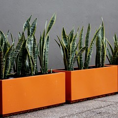 DPP_0001 (Badec Bros Deco) Tags: plants art water design wooden planters landscaping steel creative arches powder made pots features custom benches decor deco bros sculptures coated screens stainless gabion edrich badec cubedec