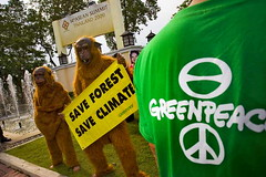 ปกป้องผืนป่าในภูมิภาคอาเซียนช่วยยุติโลกร้อน Greenpeace: protection of ASEAN forests can deter climate change