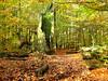 Day of the Earth (RainerSchuetz) Tags: tree forest oak hessen explore stump remains allthingsmustpass urwald eiche reinhardswald blueribbonwinner primevalforest nordhessen abigfave thesecretlifeoftrees dayoftheearth