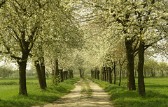 (Souran.K) Tags: tree green spring sony dream sognidreams platinumpeaceaward sourank