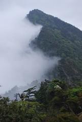 Daifugentake (STIS) Tags: trees mist mountain mountains rain weather japan clouds landscape climb climbing trail summit nara omine daifugetake