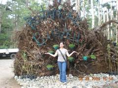 botanical garden, baguio city (xXxseL) Tags: philippines baguiocity