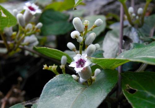 Flower-022