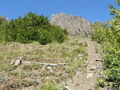 Possible bootpath up towards Buckhorn from Marmot Pass trail.
