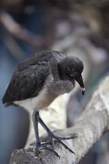 Blijdorp_IBIS-4616 (Arie van Tilborg) Tags: zoo rotterdam blijdorp ibis dierentuin diergaarde rotterdamzoo rodeibis arievantilborg