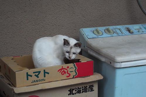 Today's Cat@20090928