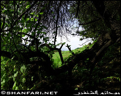 Through Plants in Wadi Darbat, Dhofar (Shanfari.net) Tags: flowers plants nature al natural ericsson sony greenery cave oman salalah  sultanate dhofar  khareef  haq  diplopoda     taqah    governate  madeinat  darbat taiq c905  raythut