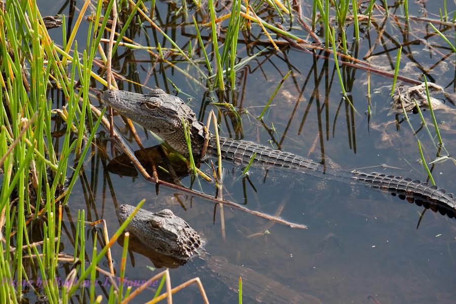 Everglades National Park (9 of 40)