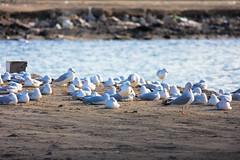 Group (Ismail Photos) Tags: blue sea bird bahrain