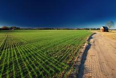 Winter Wheat (MilkaWay) Tags: winter tree field wheat shed dirtroad agriculture bostwick morgancounty ruralgeorgia