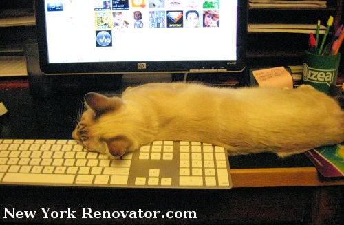 Keyboard Kitty