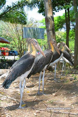 Taman Safari II - Prigen - East Java