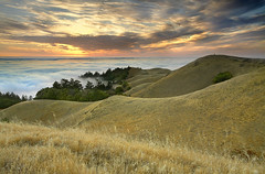 The Photographers - Marin County, California (PatrickSmithPhotography) Tags: california travel sunset wallpaper vacation usa mountain nature grass fog forest canon landscape interestingness pacific marin hill bolinas marincounty 5d redwood tamalpais stinsonbeach mkii stinson goldenstate 1740l baytree photocontesttnc10