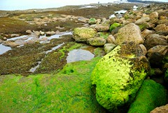 Rocks and Moss (keithhull (offline this weekend)) Tags: england seaweed green moss rocks explore pools seashore filey eastyorkshire naturesfinest brigg seeninexplore311200945