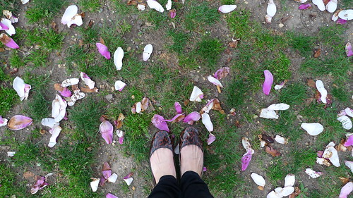 my feet and magnolia petals