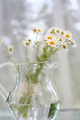 Sweet smell of summer (Gordana AM) Tags: flowers light summer white plant ontario canada flower verde green water glass yellow studio pretty afternoon bright sweet bokeh many pastel july amarillo shade pastels getty vase windsor romantic bouquet easy breeze pitcher brightness herb diffused scent lightness gentle ease handful chamomile jeune smelling licensed camomile zuto zeleno fpoe kamilica lepiafgeo fpoewhite pastelselection20120304