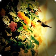 brincando (Edison Zanatto) Tags: brazil naturaleza flower bird planta nature brasil natureza natur flor pássaro ave blume pássaros beijaflor vogel nikonn90s cuitelinho picaflores fujicolorprovalue200 filme35mm edisonzanatto