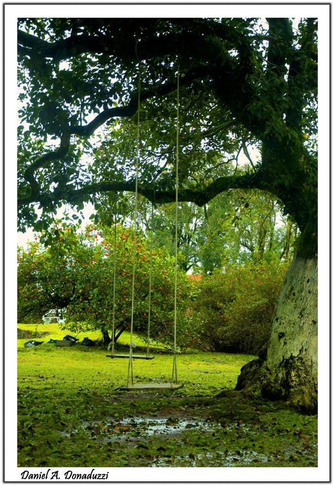 Balanço na árvore (1)