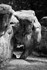 la tête de l'éléphant de Barbizon (flo74.) Tags: blackandwhite bw elephant france animal stone forest canon 50mm noiretblanc stones nb f18 rocher forêt fontainebleau eos20d seineetmarne éléphant barbizon rocherdeléléphant