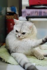 DSCF4405 (chrisusax) Tags: cat  nikon50mmf18 s5pro
