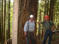 Big tree20001