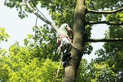 _MG_6359.JPG (zimbablade) Tags: trees sleepyhollow dougmiller videopoem