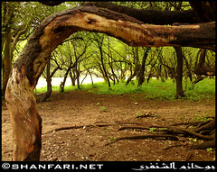 Wadi Darbat, Dhofar (Shanfari.net) Tags: trees plants tree nature forest spring natural ericsson sony greenery cave oman forests  tawi jebel jabal ain salala zufar salalah sultanate dhofar   khareef      dufar   taqah      governate atir  dhufar  darbat taiq c905 dofar    thofar thufar