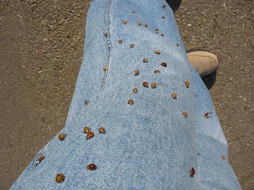 Ladybugs!!!