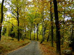 the narrow road in the forest (Per Ola Wiberg ~ Powi) Tags: autumn trees oktober sweden explore sverige 2009 hst musictomyeyes autumnfall hiddentreasure thegalaxy eker objectiveart absolutelybeautiful naturesgarden forgottentreasures naturepoetry natureplus mywinners diamondheart vivalavida peaceaward flickrgoldaward angelsangelsangels flickrbronzeaward citrit flickrsilveraward theunforgettablepictures rdsten theperfectphotographer worldwidelandscapes flickrestrellas ilovemypics natureselegantshots explorewinnersoftheworld beautifulshot fotosconestilo thebestofnature freedomhawk naturestreasures panoramafotogrfico doubledragonawards naturegreenstar photographerparadise artofimages saariysqualitypictures diamantefotosatuestilo mostbeautifulpictures ~exclusivity~ magicuniverse flickrunitedaward goldenplanet fabulousplanet naturesgreenpeaceaward jungrusundssen bestpeopleschoice mygearandme mygearandmepremium mygearandmebronze thenaturessoul betterthangoodlevel3 level1photographyforrecreation niceasitgets~level1