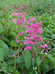 A Splash of Pink in an otherwise dense green foliage