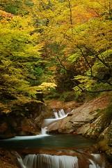 20091024_nishizawa 031
