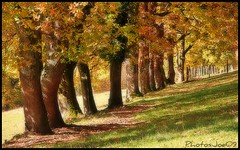 ~~La runion des Grands~~ (Jolisa) Tags: trees fall nature automne nikon arbres chnes troncs croquenature mostbeautifulpictures