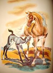 horses 11-2 075