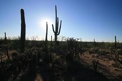 IMG_9674 (simon_travelboy) Tags: arizona tucson saguaronationalpark